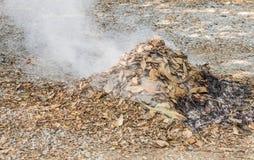 Hojas secas de la quemadura Imágenes de archivo libres de regalías