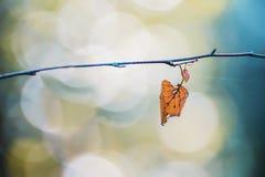 Hojas secas del amarillo en una rama Imagen de archivo