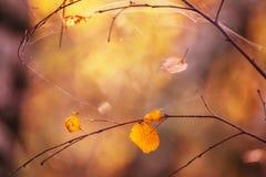 Hojas secas del amarillo en una rama Fotos de archivo libres de regalías