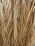 Hojas secas del coco Foto de archivo libre de regalías