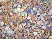 Hojas secas del otoño del primer Imagenes de archivo