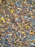 Hojas secas del otoño del primer Imagen de archivo
