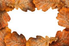 Hojas secas del roble como marco Fotografía de archivo