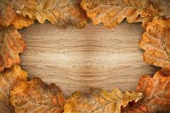 Hojas secas del roble como marco Foto de archivo libre de regalías