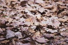 Hojas secas en la tierra fotos de archivo