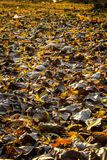 Hojas secas a la hora de la salida del sol fotos de archivo