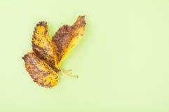Hojas secas y oxidadas del árbol Fotografía de archivo libre de regalías