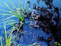 Hojas sobre el agua Imagen de archivo libre de regalías