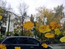 hojas sobre el vidrio del coche Imagen de archivo