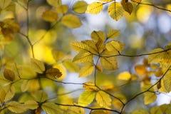 Hojas soleadas borrosas de la estación del otoño foto de archivo libre de regalías