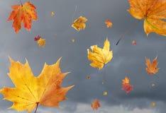 Hojas sopladas viento Fotos de archivo libres de regalías