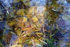 Hojas subacuáticas Foto de archivo libre de regalías