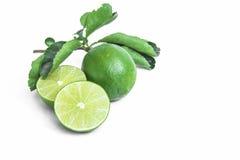 Hojas tailandesas del limón y del verde Fotos de archivo libres de regalías