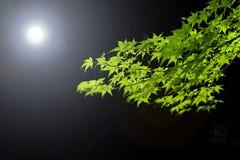 Hojas teniendo en cuenta la luna Imágenes de archivo libres de regalías