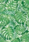 Hojas tropicales Foto de archivo libre de regalías