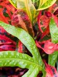 Hojas tropicales coloridas Fotos de archivo libres de regalías