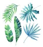 Hojas tropicales de la acuarela fijadas