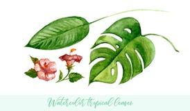 Hojas tropicales de la acuarela fijadas Clip art botánico en el fondo blanco Fotografía de archivo