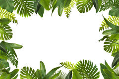 Hojas tropicales de la selva libre illustration