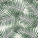 Hojas tropicales del modelo de la palma exótica inconsútil del verde en el fondo blanco Fotos de archivo libres de regalías