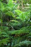Hojas tropicales del verde Foto de archivo