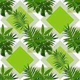 Hojas tropicales en un fondo verde Las hojas de palma Imagenes de archivo