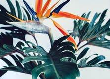 Hojas tropicales exóticas del strelizia y del xanadu de la flor en blanco imagen de archivo libre de regalías