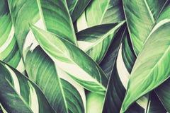 Hojas tropicales frescas del verde imagen de archivo libre de regalías