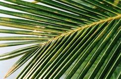 Hojas tropicales verdes Fotos de archivo