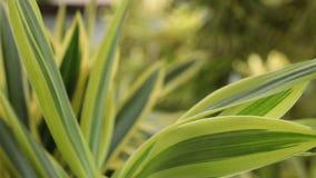 Hojas tropicales verdes Día soleado en la isla tropical de Bali, Indonesia almacen de video