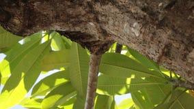 Hojas tropicales verdes Día soleado en la isla tropical de Bali, Indonesia almacen de metraje de vídeo