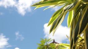 Hojas tropicales verdes en un fondo del cielo azul Día soleado en la isla tropical de Bali, Indonesia almacen de metraje de vídeo