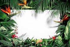 Hojas tropicales y flor del verano de moda foto de archivo