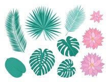 Hojas tropicales y flores rosadas Fotos de archivo libres de regalías