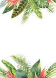 Hojas tropicales y ramas del marco rectangular de la acuarela en el fondo blanco libre illustration