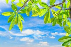Hojas verdes Imágenes de archivo libres de regalías