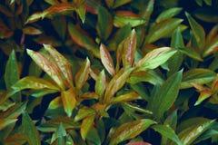 Hojas verdes Imagen de archivo libre de regalías