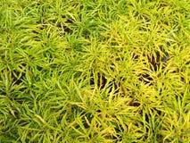 Hojas verdes amarillas en el jardín imagenes de archivo