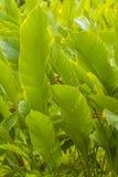 Hojas verdes claras Imagen de archivo