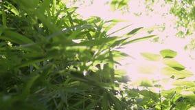 Hojas verdes de árboles contra los rayos del sol, Sun que brilla a través de las hojas verdes en la selva almacen de video
