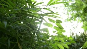 Hojas verdes de árboles contra rayos del sol almacen de video