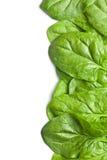 Hojas verdes de la espinaca Imagen de archivo