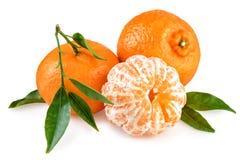Hojas verdes de las mandarinas frescas aisladas en blanco Imágenes de archivo libres de regalías