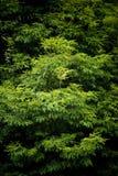 Hojas verdes del árbol Imagen de archivo libre de regalías
