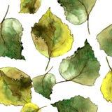 Hojas verdes del abedul Modelo inconsútil del fondo Textura de la impresión del papel pintado de la tela Imágenes de archivo libres de regalías