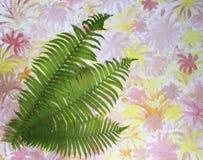 Hojas verdes del helecho en un fondo colorido Foto de archivo libre de regalías