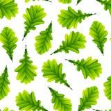 Hojas verdes del roble aisladas en el fondo blanco libre illustration