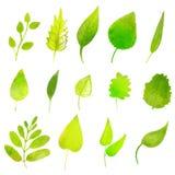 Hojas verdes del vector en el fondo blanco Foto de archivo libre de regalías
