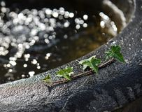 Hojas verdes en fregadero del agua con la luz del sol imagen de archivo libre de regalías