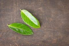 2 hojas verdes en la tabla Fondo de madera Fotografía de archivo
